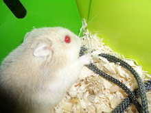 Hamsters who eat camera straps!