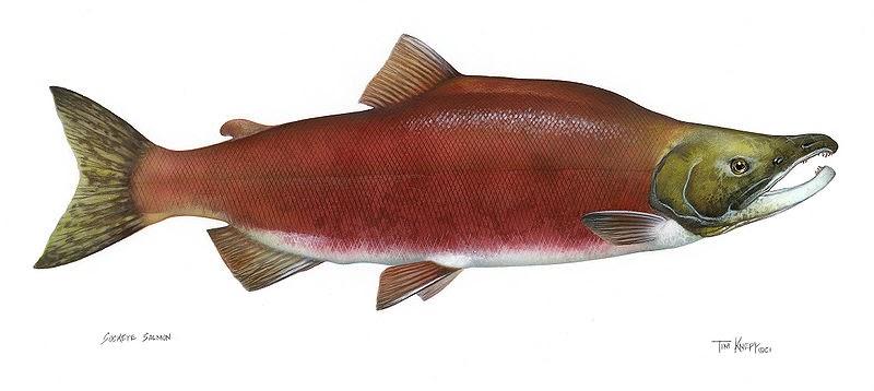 Regard sur la p che et l 39 aquaculture aquablog avis de for P o fish