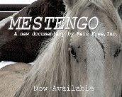MESTENGO BY REIN FREE