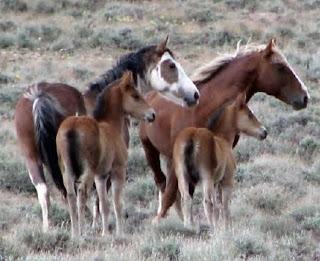 http://3.bp.blogspot.com/_rEtijg9Zriw/SvNOsJplooI/AAAAAAAAB8Q/E6rfKKnpS1o/s320/Calico+Wild+Horses_June+2009.jpg