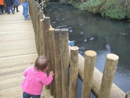 Savannah checking out the gators at St. Augustine's Alligator farm