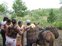 Curso de Beneficiamento da Mandioca na Comunidade dos Almeidas - Itagibá-BA