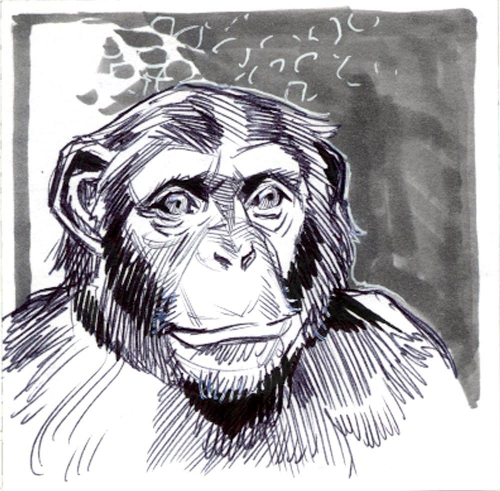 Line Drawing Of Monkey Face : Dewey draws january