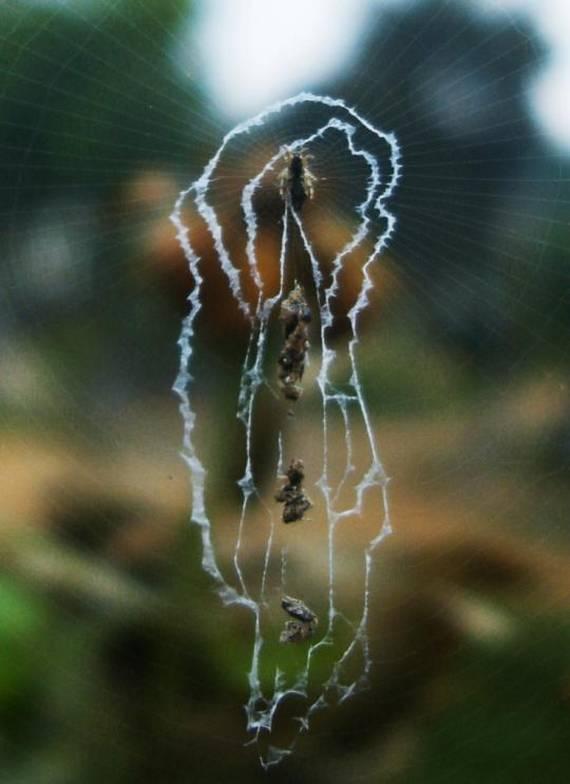 beautiful spider web amazing world