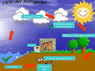Ciclo+del+Nitrogeno.JPG (960×720)