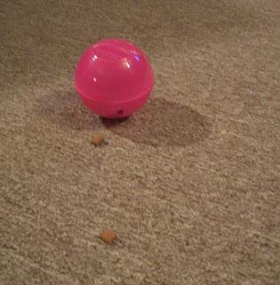 Dollarama Cat Toy Holes