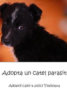 Anunturi adoptii caini & Pisici Timisoara