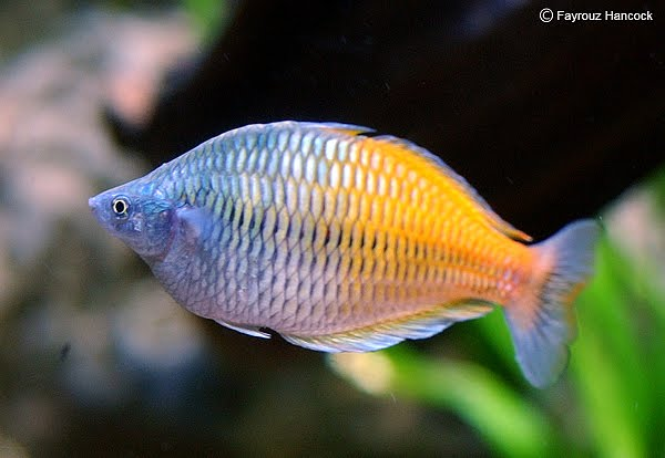 Fayrouz break room dallas world aquarium for Blue fish dallas