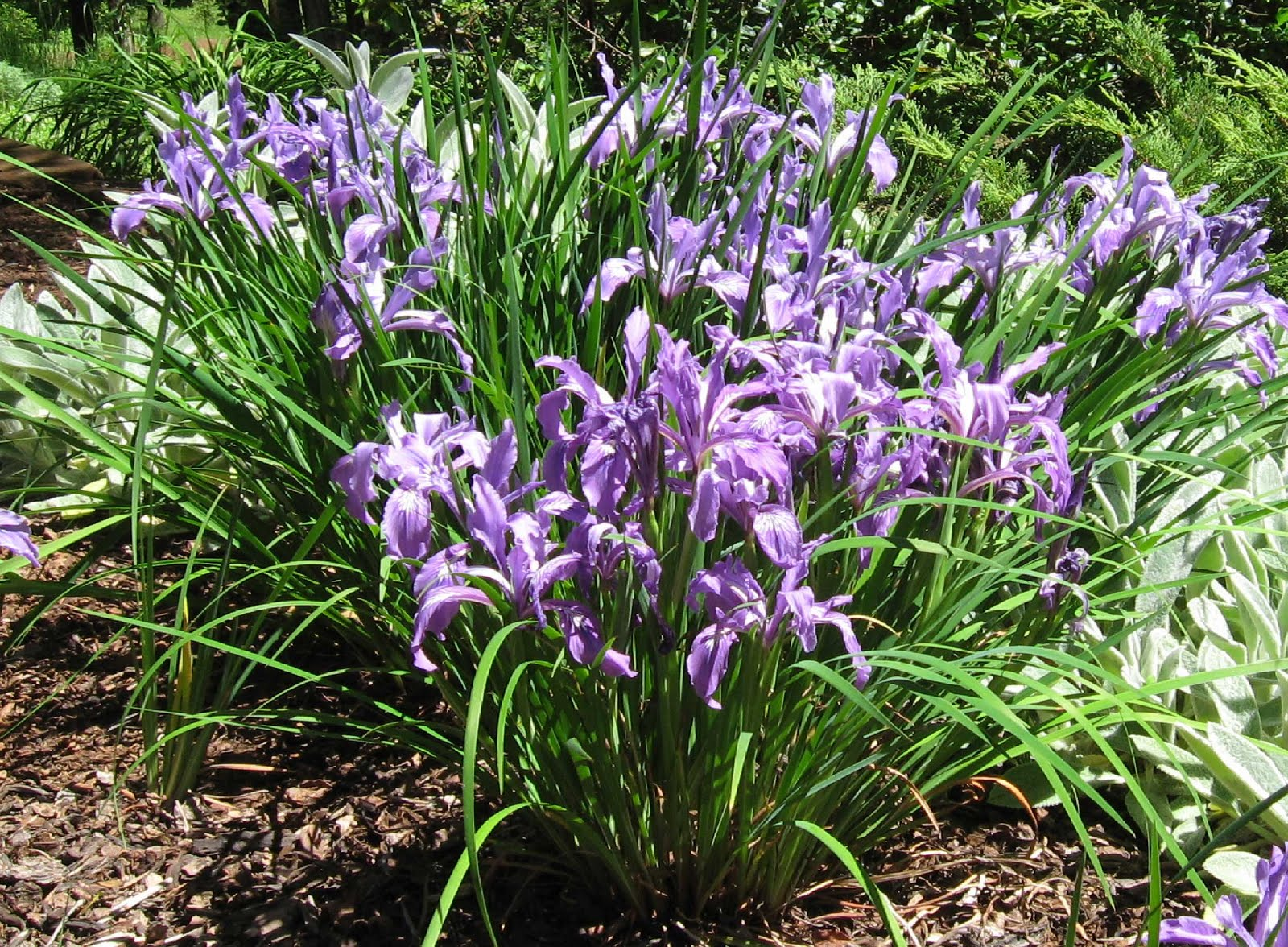 Cottage Grove Garden Club Oregon Plant Fair Saturday May 8