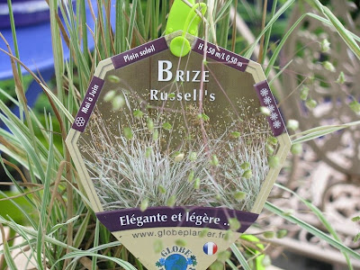 Brize Russell's  ( Briza media Russels) 015