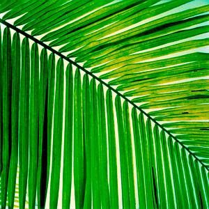 palm leaf fine art photographed