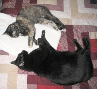Rascal & Catzee are peacefully taking a nap.