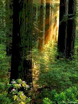 incunables-primaveras-en-la-llaga-del-bosque