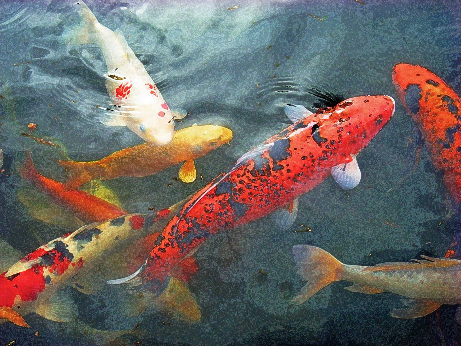 Mudbay musings oh boy koi for Japanese fish painting