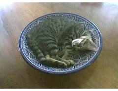 Maggiolino nel piatto marocchino