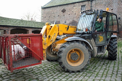 Farm Piglets Tractor Temple Newsam