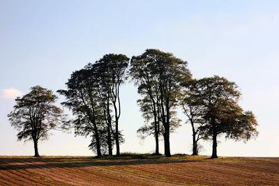 Trees Aberford