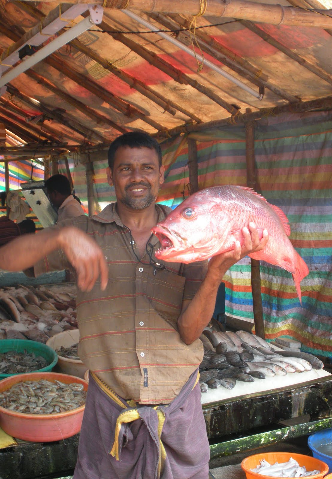 From dc to delhi ft cochin for Mural fish in tamil