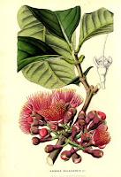 Szerelmi bájitalok, szerelmi serkentők az aromaterápiából