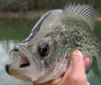 Crappie Fishing Tips on Tips  Basic Crappie Supplies That Every Fisherman Needs   Fishing