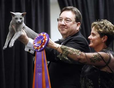 Russian Blue cat winner of