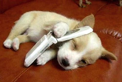 [phonedog.jpg]
