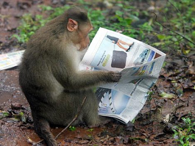 monkey reading newspaper in a city