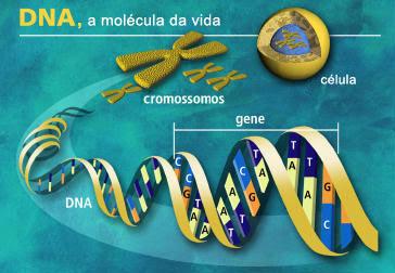 reproducao humana 10 VIRGEM DA LAPA