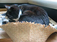 Winnie having a snooze by the window - December 2003.