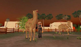 Second life animals - camels
