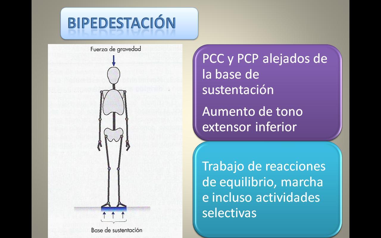 Neurorehabilitacion. FTN. Pablo Cesar Campos DIaz: junio 2010