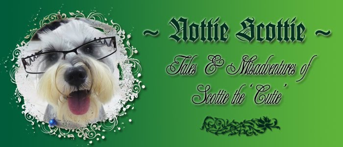 ~ Nottie Scottie ~