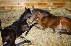 The Nurse Mare's Foal