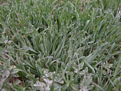 Green Mountain, Lakewood CO, Grass With Dew