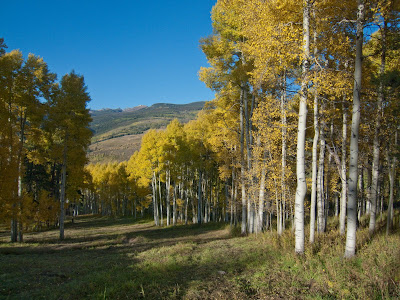 Vail Trail Run, Golden Aspens