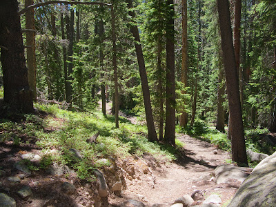 Mount Columbia, Forested Trail