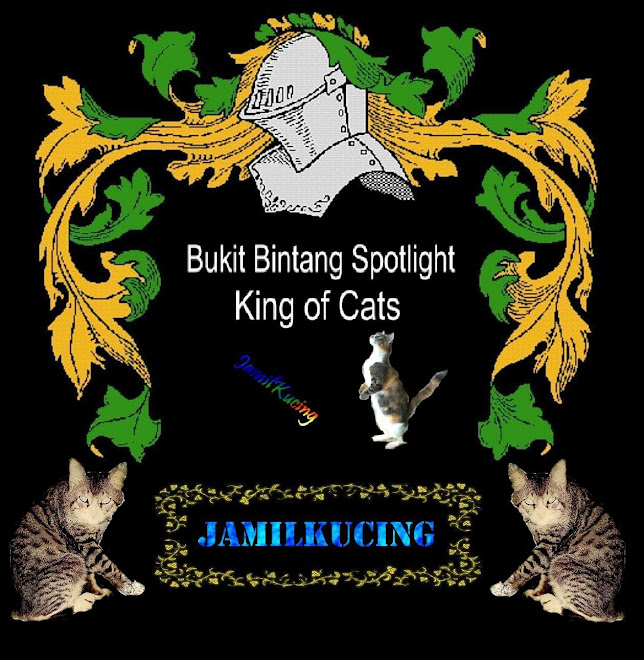 JKCR Cats Rescue ( JamilKucing Cats Rescue )