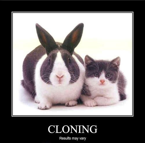 should pets be cloned Pros and cons of animal cloning feb 25, 2014 0 should we clone animals cloning has been a fantasy of science fiction books and movies for all of history.