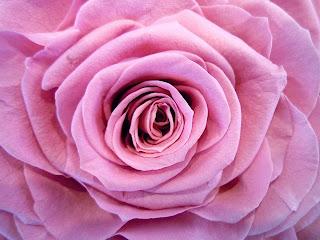 大輪のバラのプリザーブドフラワーがゴージャスで素敵です。