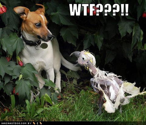 funny-dog-pictures-wtf.jpg