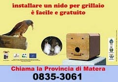 Una buona azione: installare nidi per grillaio
