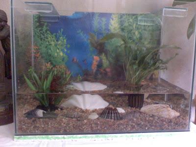 Como armar pecera peces agua fria y recomendaciones for Los mejores peces de agua fria