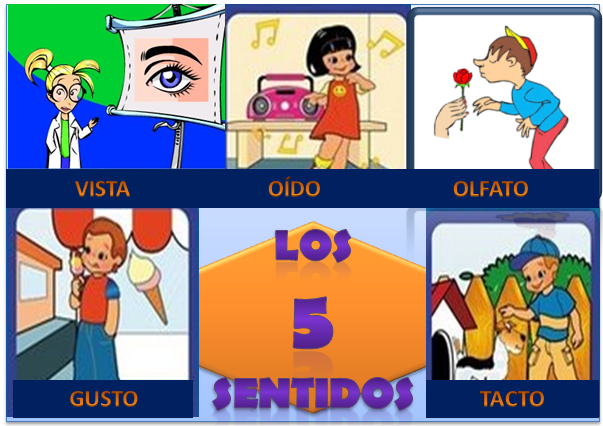 5 sentidos: