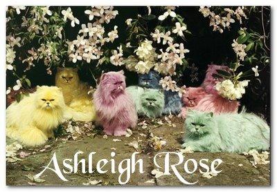 Ashleigh Rose since 1991