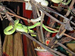 Snake Temple, Klenteng yang Dihuni Ratusan Ular