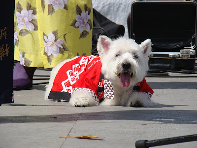 NeNe dog at Nisei Week Festival
