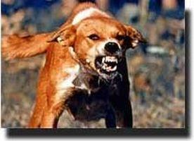 anjing+rabies.jpg