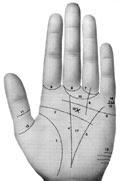 las líneas de la mano