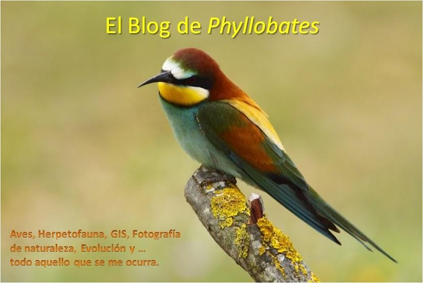 El Blog de Phyllobates