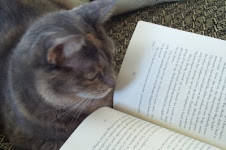 Even Mr. K's cat likes to read